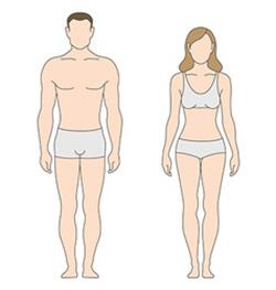 male vs female body shape